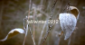 fall/winter 2012