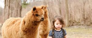 Simone and her alpacas