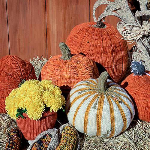 pumpkins_500_medium